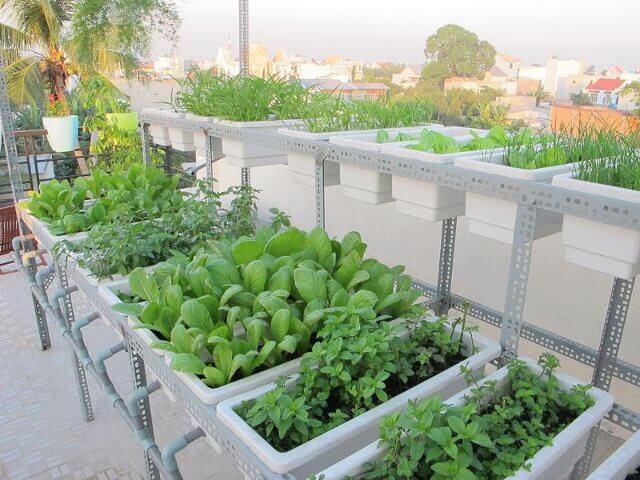 Cách trồng rau sạch tại nhà cực nhanh và đơn giản
