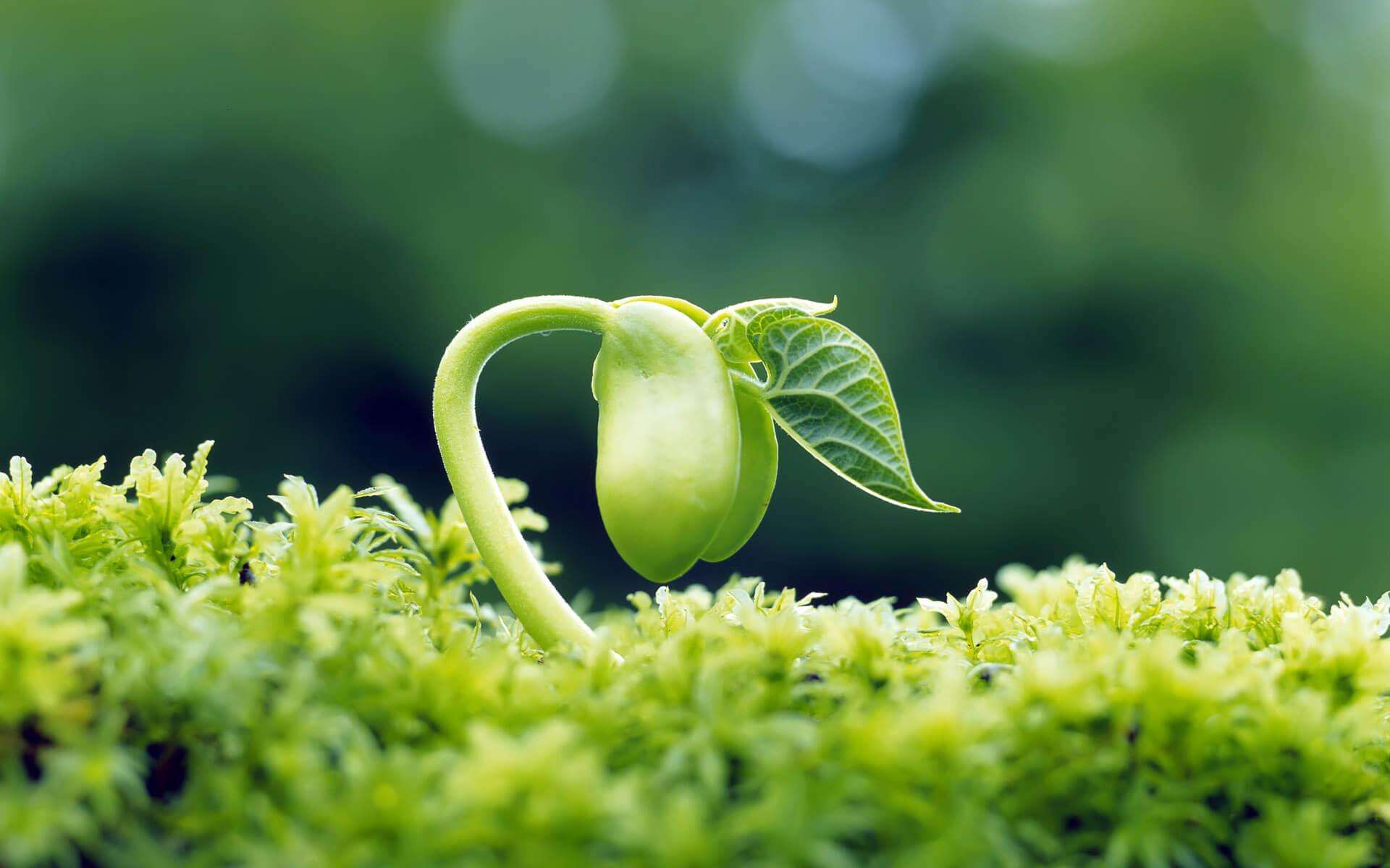 Cách trồng rau mầm dễ nhất cả nhà mê luôn