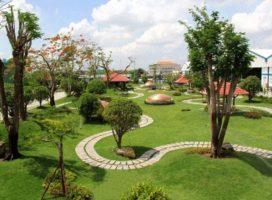 Báo giá cây xanh công trình tại Hà Nội đầy đủ và chi tiết