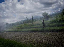 Bali, vùng đất thiên đường với người này, nhưng lại là địa ngục trần gian đối với người khác.