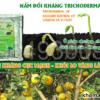 Nấm trichoderma loại nào tốt? Hướng dẫn lựa chọn nấm đối kháng trichoderma
